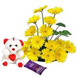 Pretty Yellow Gerberas with Teddy N Dairy Milk Silk