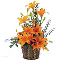 Visually Tender Love Bouquet Of Lilies