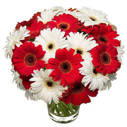 Dynamic Glory Gerbera Bundle