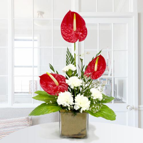 Remarkable Arrangement of Anthuriums n Carnations in Glass Vase