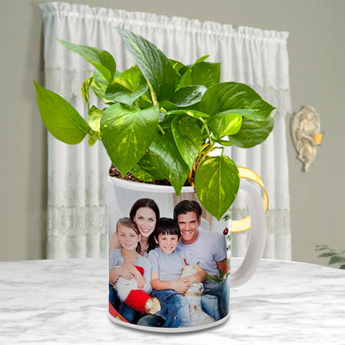 Lucky Money Plant in Personalized Coffee Mug for Mom