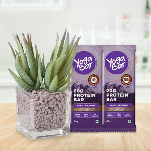 Healthy Selection of Aloe Vera Plant with Protein Bar