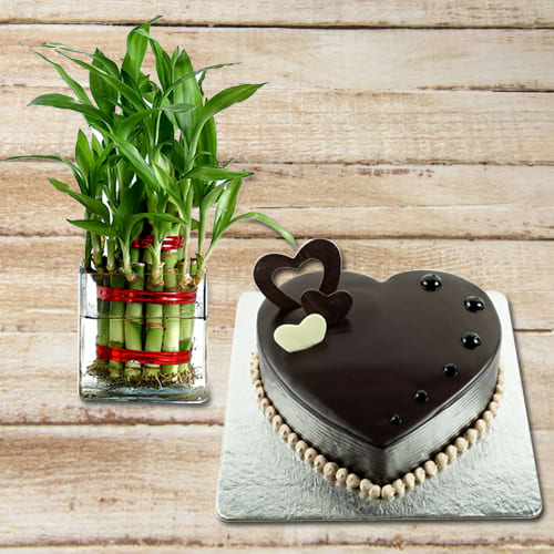 Charming House Warming Selection of Good Luck 2 Tier Bamboo Plant with Cake